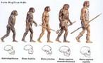 Modifica��es biol�gicas dos ancestrais humanos de acordo com descobertas arqueol�gicas. <br><br/> Palavras-chave: evolucionismo, homin�deos, pr�-hist�ria, arqueologia.